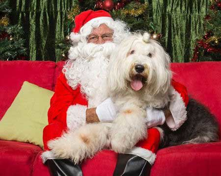 Santa Paws pictures 1 dog with Santa Claus on red sofa