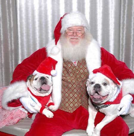 Santa Paws pictures 2 dogs with old school Santa Claus
