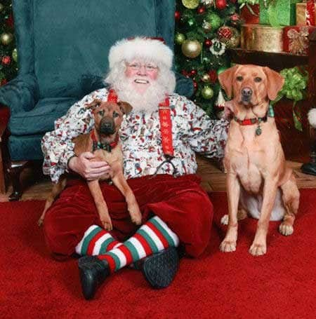 Santa Paws pictures 2 dogs with Santa Claus