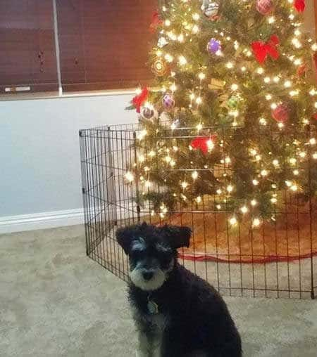 Christmas dog proofing with a gate