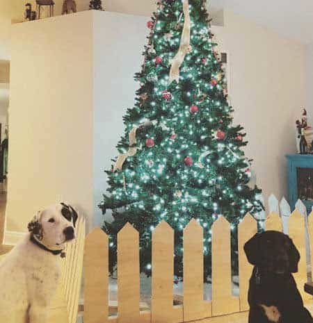 Christmas dog proofing with a picket fence