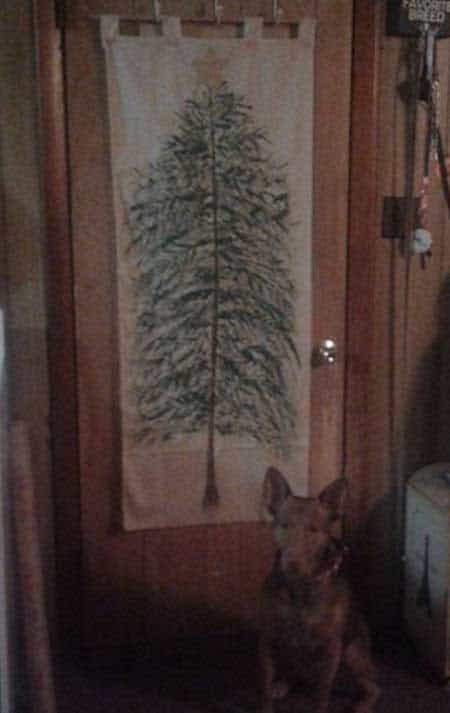 Christmas dog proofing with a picture of a tree