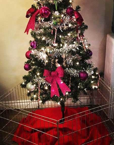 Christmas dog proofing with a big gate