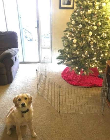 Christmas dog proofing with a baby gate