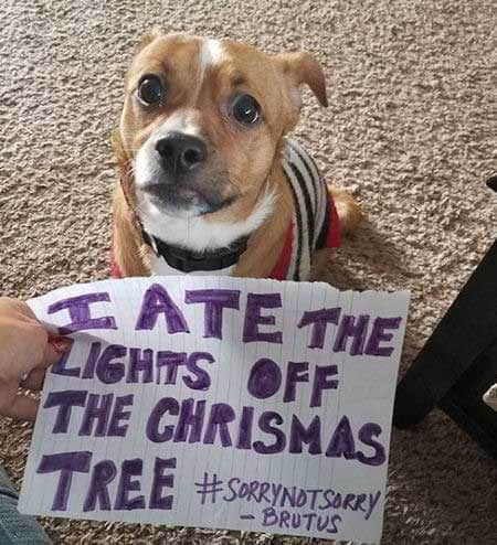 Christmas dog shaming light eater