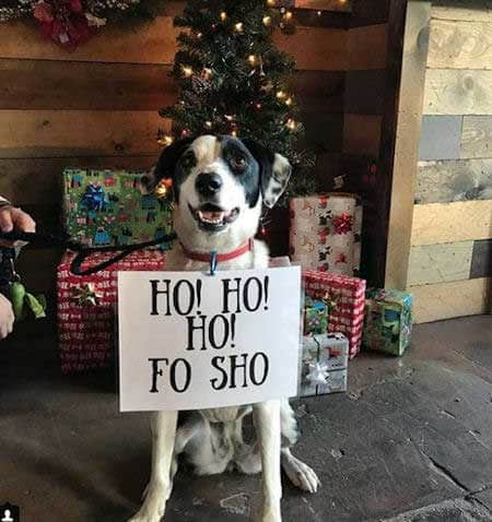Christmas dog shaming ho ho fo sho