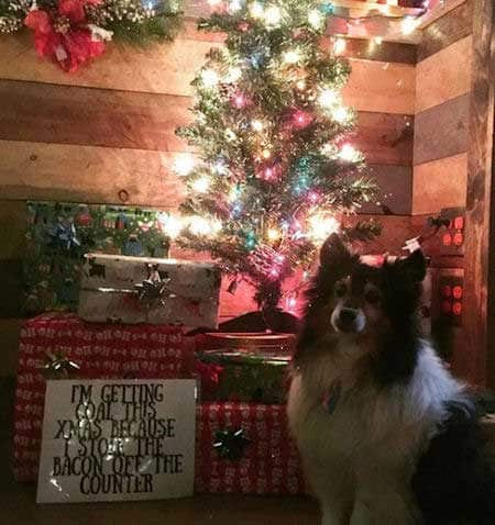 Christmas dog shaming canine ate bacon off the counter