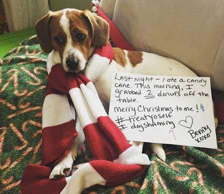 Christmas dog shaming canine keep eating food