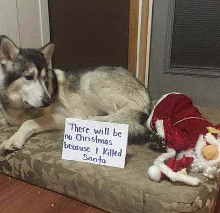 Christmas dog shaming Dog killed santa