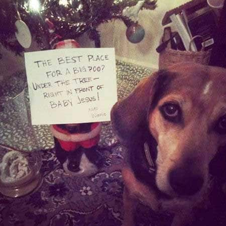 Christmas dog shaming picture of a dog that dropped a duece under the tree