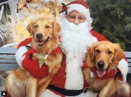 2 Cute Dogs with Santa Paws golden retrievers