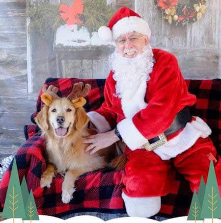 Cute Dog Pictures with Santa Paws golden retriever dressed as a reindeer