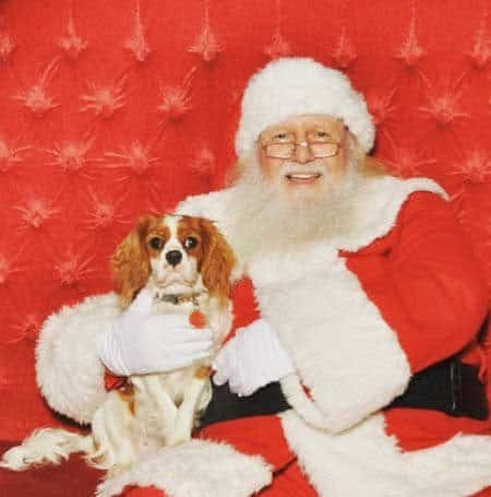 Cute Dog Pictures with Santa Paws on a red sofa