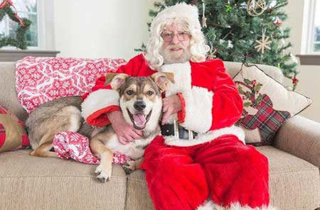 Cute Dog Pictures with Santa Paws on a sofa