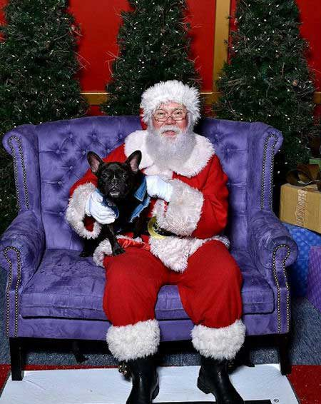Cute pooch with Santa Paws