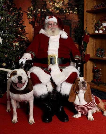 2 Cute Dogs with Santa Paws