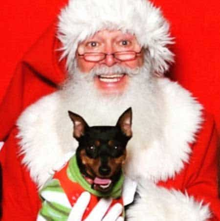 Cute Dog Pictures with Santa Paws little pooch smiling Santa