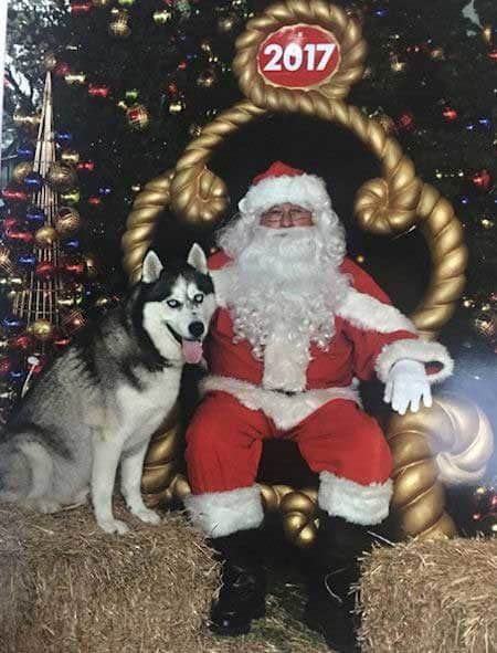 Cute Dog Pictures with Santa Paws with a Husky