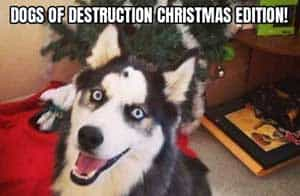 Christmas Funny Dogs of destruction