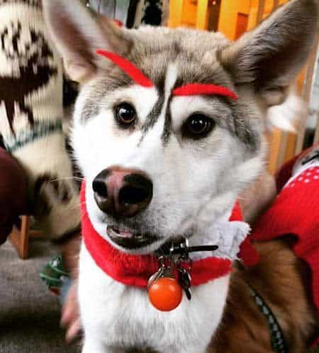 Dogs dressed up for Christmas as something crazy