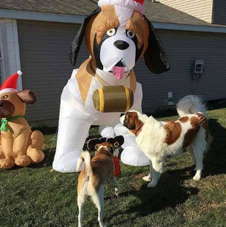 Dogs dressed up for Christmas dogs outside looking at a blow up dog