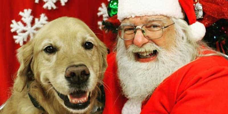 Santa Paws picture with golden retriever for funny dogs on christmas