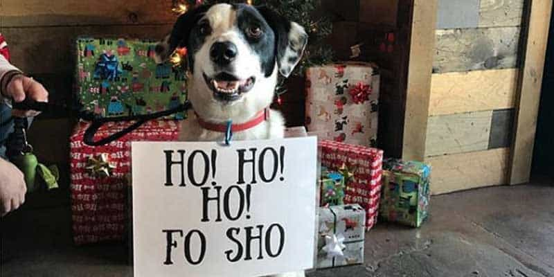 "Christmas dog shaming dog with a sign that says, ""ho ho ho fo sho"""