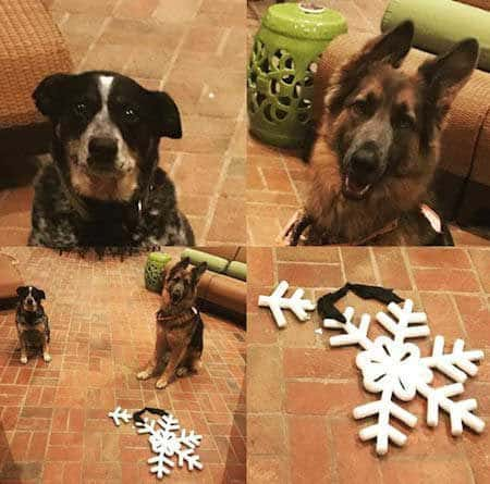funny dogs of christmas destruction with a broken snow flake