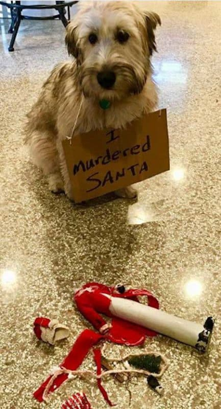 funny dogs of christmas destruction with a eaten santa