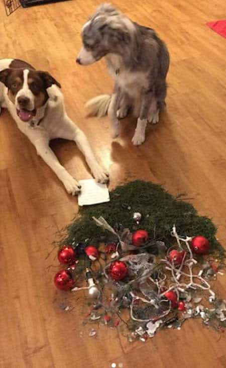 funny dogs of christmas destruction with a pile of stuff from the tree