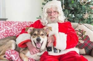 Santa Paws cute dog pictures