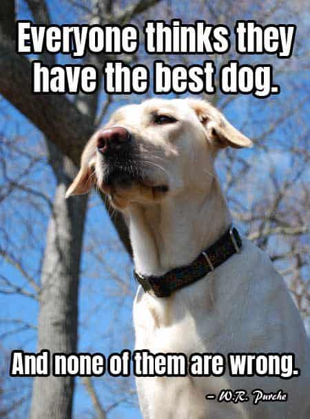 Dog Pictures with words of truth. Everyone thinks they have the best dog. And none of them are wrong.