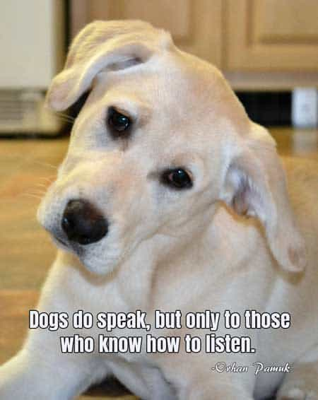 Dog Pictures with words of truth. Dogs do speak, but only to those who know how to listen.