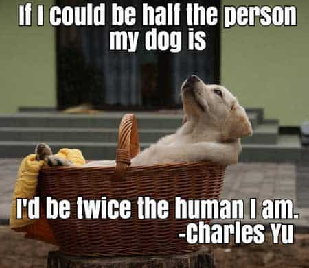 Dog Pictures with words of truth. If I could be half the person my dog is I'd be twice the human i am