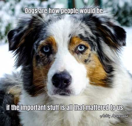Dog Pictures with words of truth. Dogs are how people would be if the important stuff is all that mattered to us.
