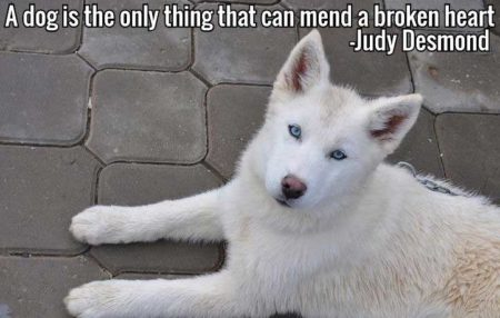 Dog Pictures with words of truth. A dog is the only thing that can mend a broken heart.