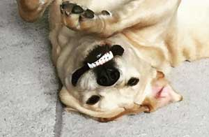 upside down funny dogs featured