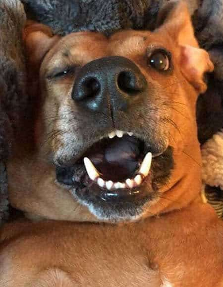Funny Pictures of dogs with a dog upside down with mouth open