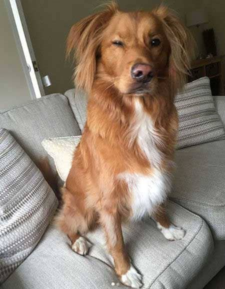 Funny Pictures of dogs with a canine sitting on the sofa giving a funny look