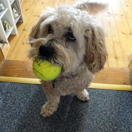 Funny Pictures of dogs with a dog with a ball giving a funny look