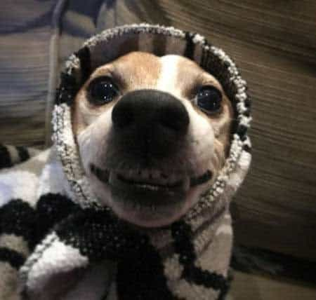 Funny Pictures of dogs with a dog looking like an old woman