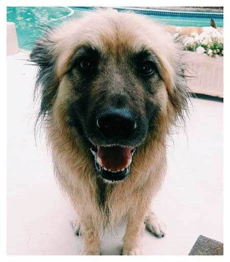 Pictures of Rescue Dogs that are happy near a pool