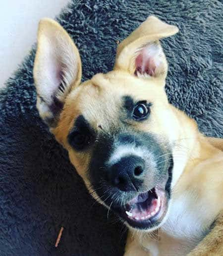 Picture of a happy Rescue Dog