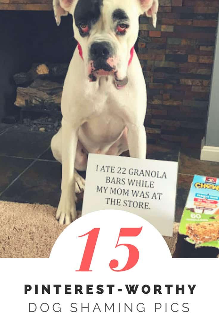 15 Pinterest worth dog shaming pic at BarkingLaughs.com