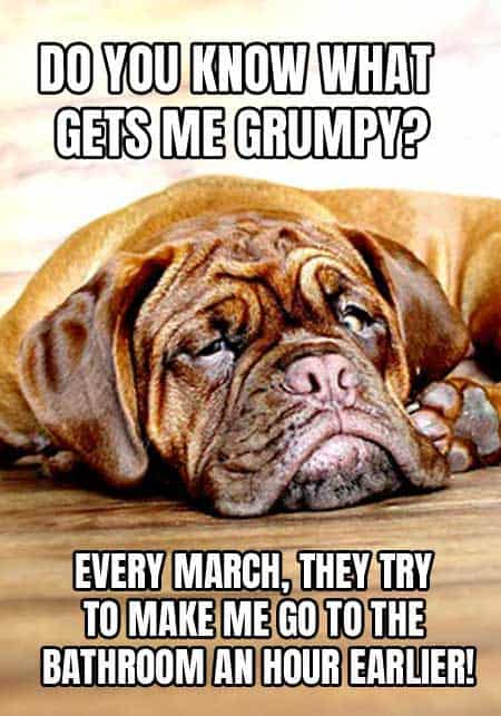 Grumpy dog meme, mad about daylight saving time