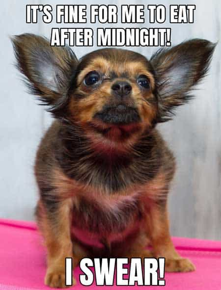 funny dog meme of a dog that looks like a gremlin
