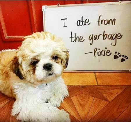 Silly dog shaming pictures of a garbage eater