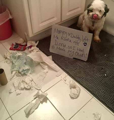 Silly dog shaming pictures of a dog that destroyed a bathroom