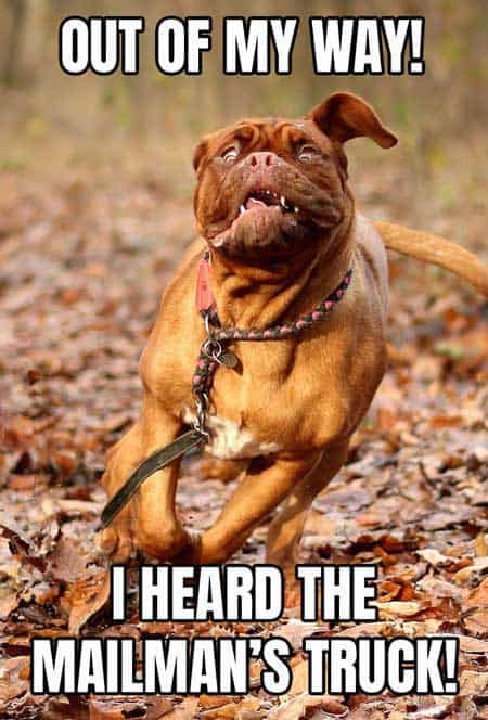 Out of my way funny dog meme. Dog hear the mailman truck
