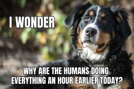 The Wonder Dog Meme, with him wondering about daylight savings time